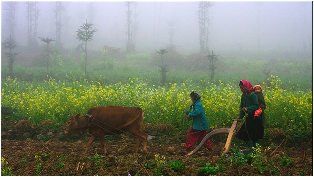 Women working in the fields.